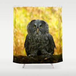 Owl Staring Contest Shower Curtain