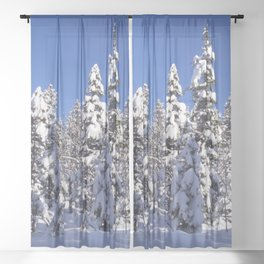 Snow covered trees in the forest. Winter day with blue sky. Sheer Curtain
