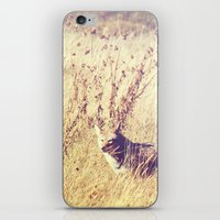 coyote iPhone & iPod Skins featuring Coyote  by Shelby Babbert Photography