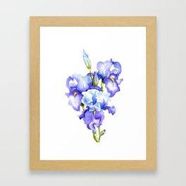 Spring Irises Framed Art Print