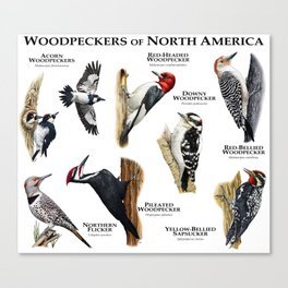 Woodpeckers of North America Canvas Print