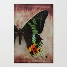 Sunset Moth Wing Canvas Print