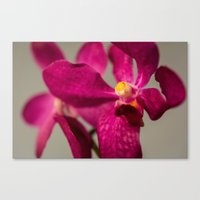 orchid Canvas Prints featuring Orchid by Michelle McConnell