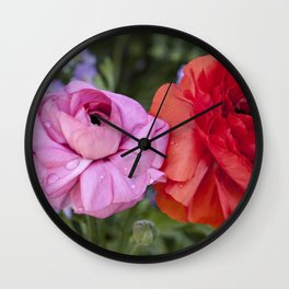 Ranunculus with water drops Wall Clock