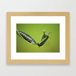Monarch Caterpillars Framed Art Print
