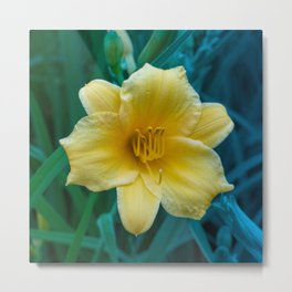 Yellow Day Lily on Green Blue Background Metal Print