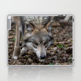 Mexican Gray Wolf Laptop & iPad Skin