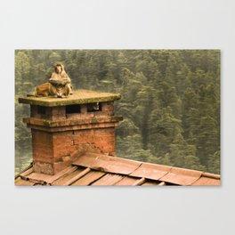 Monkey meditation Canvas Print