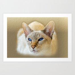 SIAMESE CAT LOVE Art Print