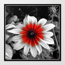 Flower | Flowers | Red Stroke Gaillardia | Red and White Flower | Nadia Bonello Canvas Print