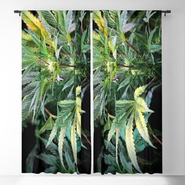 Marijuana Stand Out Blackout Curtain