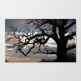 Crazy tree Canvas Print