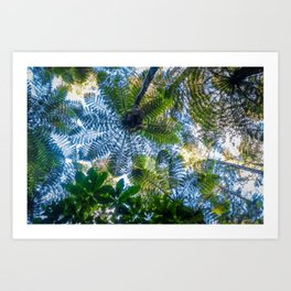 Giant ferns in redwood forest, Rotorua, New Zealand Art Print