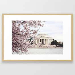 Cherry Blossoms & the Jefferson Memorial Framed Art Print