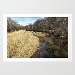 Grass Alongside Oak Creek Art Print