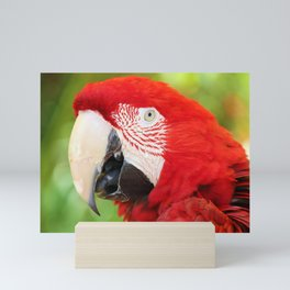 Catalina Macaw Mini Art Print