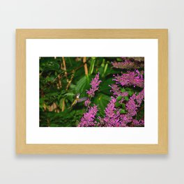 Hummingbird and agastache flower 60 Framed Art Print