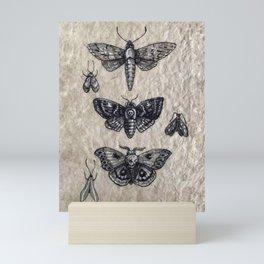 Moth studies Mini Art Print