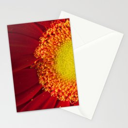 Nature's Beauty Botanical / Nature / Floral Photograph Stationery Cards