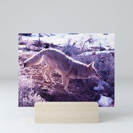 Wild Coyote Jump photo by CheyAnne Sexton Mini Art Print