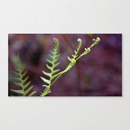 Fresh Unfurling Fern Canvas Print