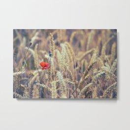 Wild Poppy in the Wheat Field Metal Print