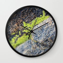 lichen on a hike Wall Clock