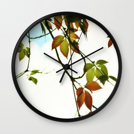 Creeper in autumn colors Wall Clock
