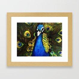 Modest Peacock Framed Art Print
