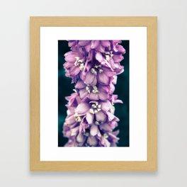 Lei'd  Framed Art Print