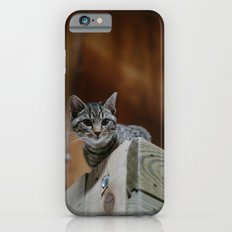 Barn Cat Slim Case iPhone 6s