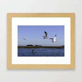 Sneakky Seagulls Framed Art Print