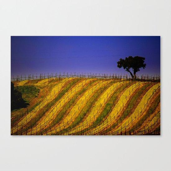Vineyard in Northern California Canvas Print