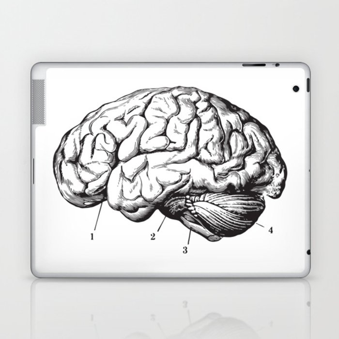 Human Brain Sideview Anatomy Detailed Illustration Laptop Ipad