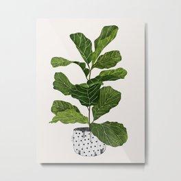 Fiddle leaf fig Tree Metal Print