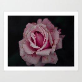 Pink flower (2) Art Print