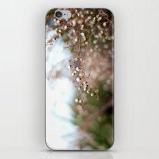 Winter Aster II iPhone & iPod Skin