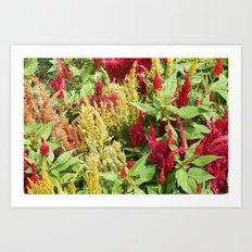 DC Flowers Art Print