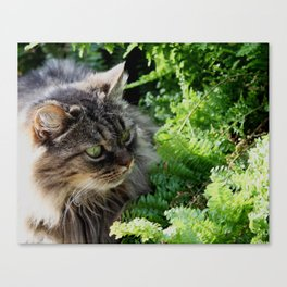Natural Element Canvas Print