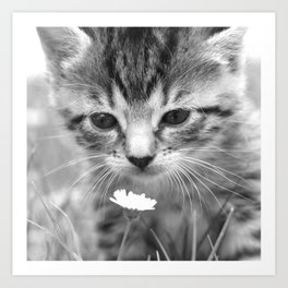Cat Picture in Black and White Art Print
