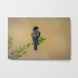 Bluebird of my Happy Space by Reay of Light Metal Print