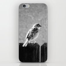Sparrow BW iPhone & iPod Skin