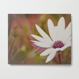 Daisy Flower Photograph Metal Print