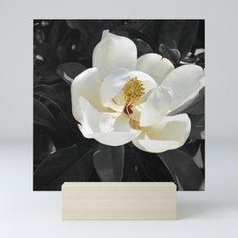 Steel Magnolias - Sweet scented white Magnolia flower Mini Art Print
