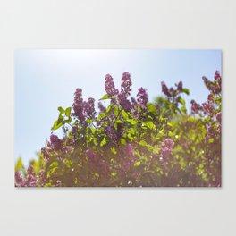 Hazy Lilacs Canvas Print