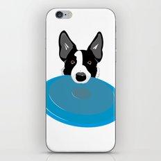 Border Collie - Disc Dog 2 iPhone & iPod Skin