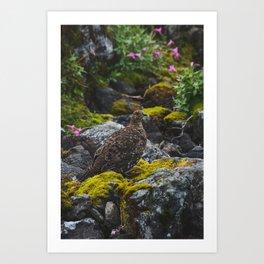 Grouse Art Print
