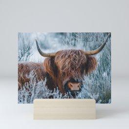 Snowy Scottish Highland Cow | Animal Photography Mini Art Print