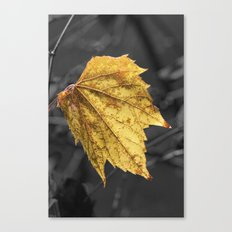 Yellow fall leaf on gray background Canvas Print