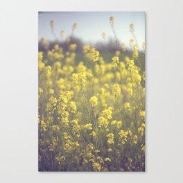 Mustard  Canvas Print